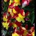 Pretty Flowers   by dmrams