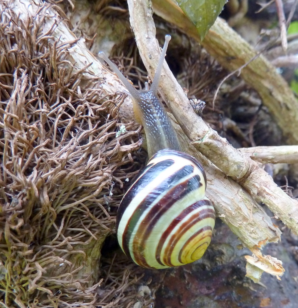 Snail #2  On the move. by dulciknit