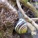 Snail #2  On the move. by dulciknit