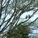 Bird chat by sabresun