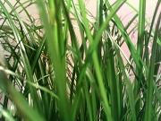 8th Apr 2011 - Grass