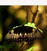 13th Apr 2011 - Elusive Butterfly