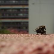 15th Apr 2011 - Flies