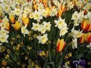 13th Apr 2011 - Flowers