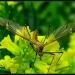 Dragonfly Dreams? by cjwhite