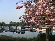 16th Apr 2011 - Boats and blossom at Buckden marina