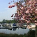 Boats and blossom at Buckden marina by busylady