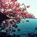 Blossom by halkia