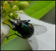 18th Apr 2011 - The Fly!