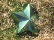 27th Mar 2010 - Fallen Star