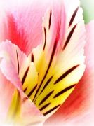 18th Apr 2011 - Flower