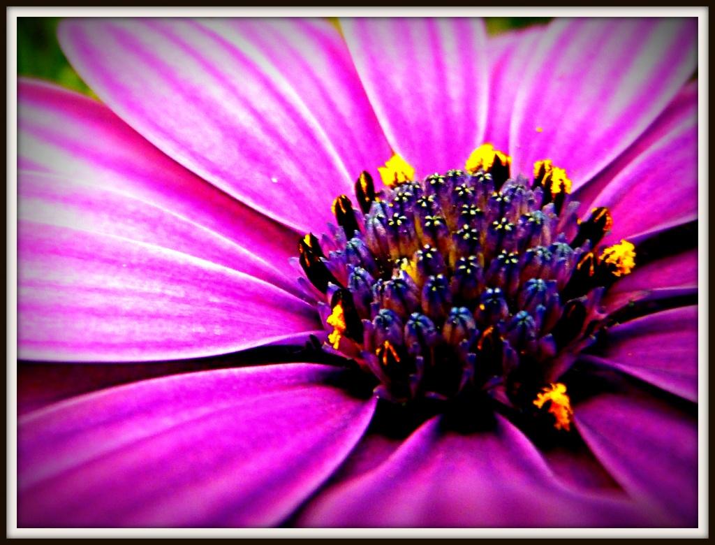Pretty Pollen by denisedaly
