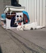 18th Apr 2011 - Garbage cat