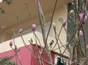 18th Mar 2011 - DAY 77-365