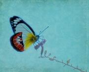 21st Apr 2011 - Butterfly dream