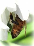 """21st Apr 2011 - """"B"""" as in Bee"""
