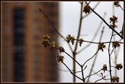 23rd Apr 2011 - condos and weeds