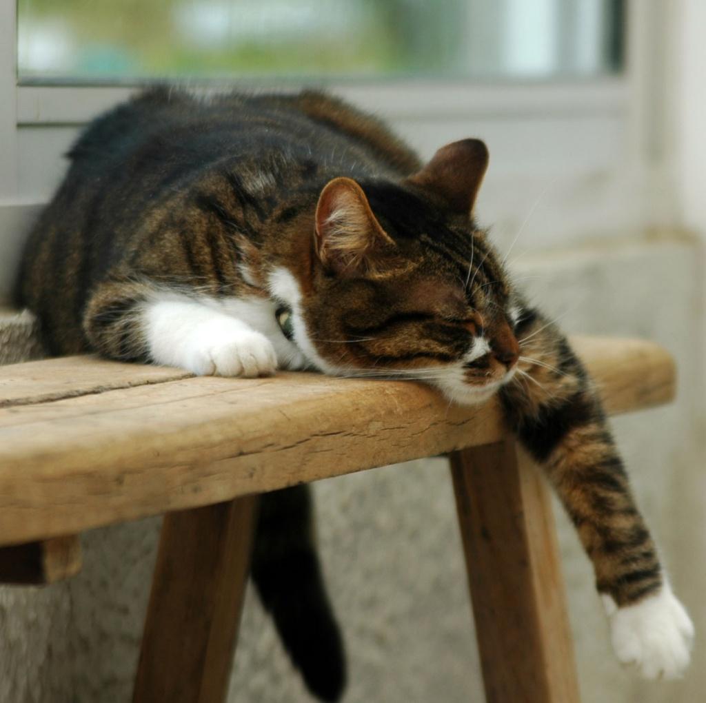 Napping by parisouailleurs