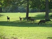 23rd Apr 2011 - Deer