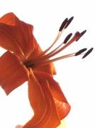 """25th Apr 2011 - """"F"""" as in Flower"""