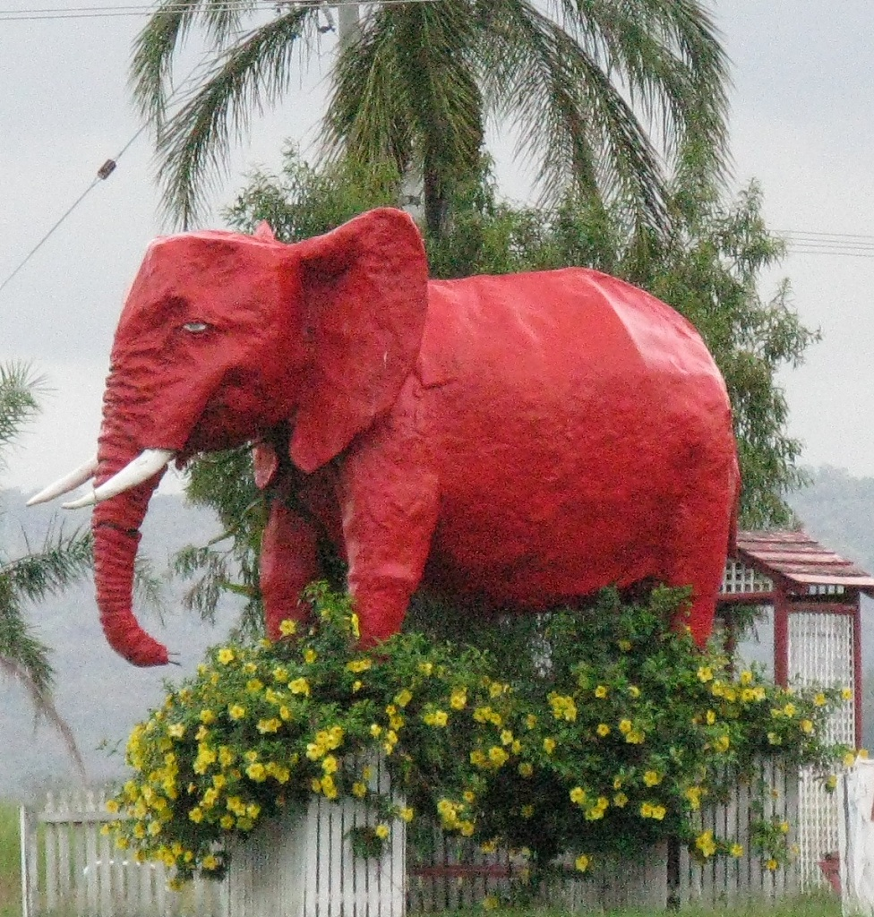 Red Elephant by loey5150