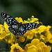 Blue Wanderer by bella_ss