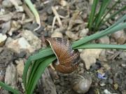 28th Apr 2011 - Snail shell