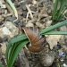 Snail shell by busylady