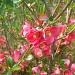 Flower Bush by julie
