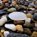 Beach Glass in Provincetown by lauriehiggins