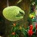 Alien Flora by bradsworld