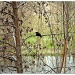 a bird in a tree by pfmandeville