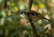 4th May 2011 - Bird 'n bokeh