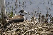 3rd May 2011 - Waiting Bird