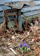 1st Apr 2010 - Exact Right Flower...