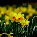 Happy Easter! by blightygal