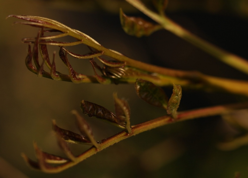New Leaves Unfurling  by netkonnexion