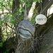 Tree samurai by sabresun