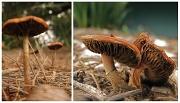 7th May 2011 - Mushroom-tastic!