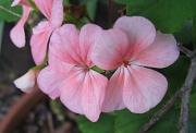 10th May 2011 - Pink