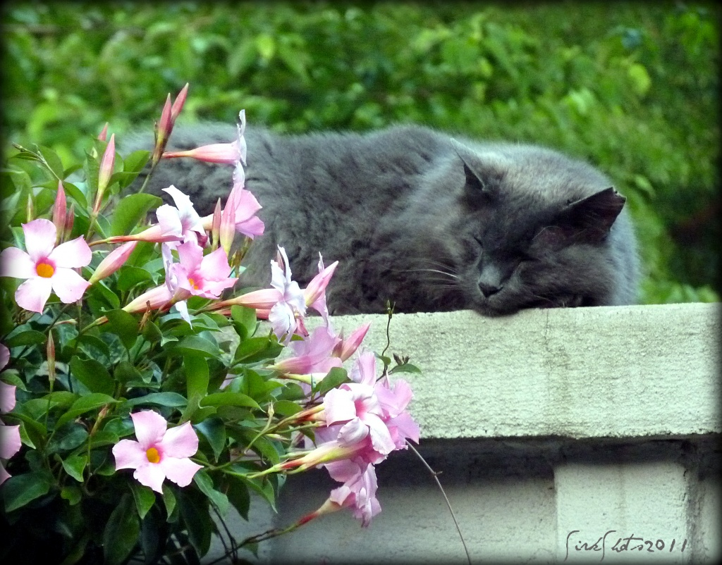 Afternoon Nap by peggysirk