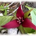 Regal Splendor by sunnygreenwood