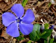 12th May 2011 - Nature's Star