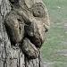 Interesting tree by dora