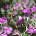 Buzzy Bee by kerristephens