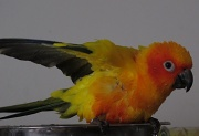 14th May 2011 - How to bath a parrot (part 4)