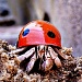 Hermit crab by corymbia