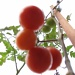 Abstract tomatoes by alia_801