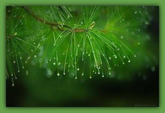 Rainy Day by bluemoon