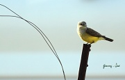 18th May 2011 - Pretty Bird